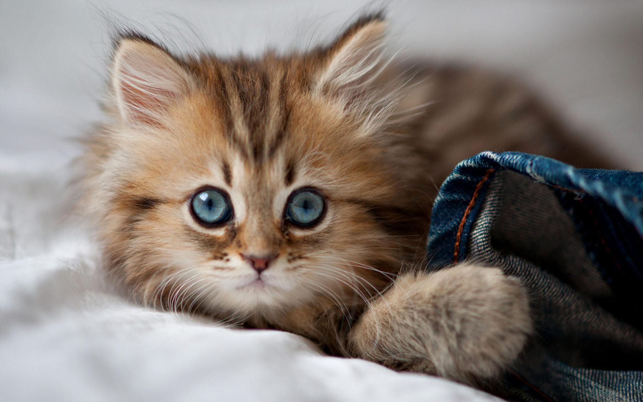 фотографии милых кошек последнее