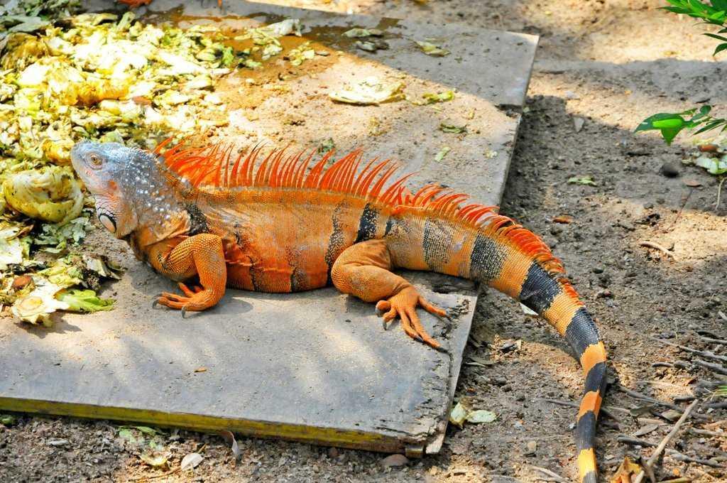 Гондурас животные