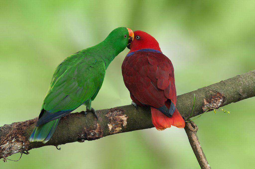 благородном зелено-красном попугае
